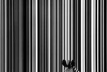 Stripes / by Mio Creative Design