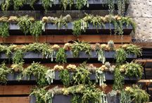Gardens / Vertical gardens, and gardens that are more conventional.  / by Lynn Green