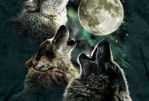 Three [...] Moon / Parodies of the Three Wolf Moon Shirt. / by Allison Matus