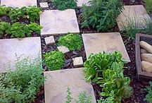 Garden Madness / Because I am an obsessed gardener... / by Jennifer Thermes