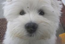 Puppy Love / by Shanna Broadhurst