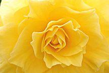 Flowers / by Nicole Gensman
