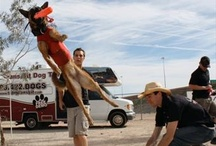 Dog Training Pictures / by Sit Means Sit