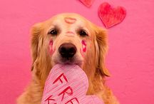 Just Cute Cute Cute Goldens  / cute pictures of golden retrievers / by The Daily Golden