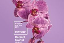 Pantone color of 2014-Radiant Orchid / by BelliniBabies