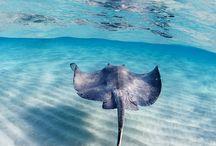 The Ocean Beckons / by Bill Werle