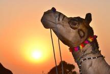 Pushkar ka Mela / by ABC News