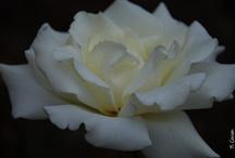 Flowers / by Ann Marie