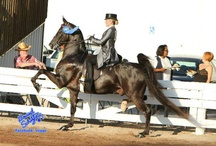 Horse Show Clothes / Show clothes / by Mandi Cool