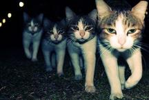 kitties / by Karin Jenkins
