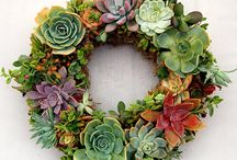 Living Wreaths / Living wreaths made with succulents / by Dahlia Barn