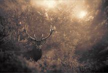 The Wild / by Gabe Alvarado
