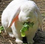 bunnies / by Barbara Albert