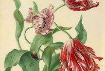 ilustración botánica / by Alejandra Alarcon