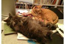 Cat's / by Monica Danielse