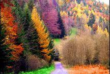 magnificent nature  / by Jessica Ellis