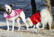 It's Cold Outside! Facebook Fan Photos / by Stubby Dog