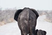 Elephants are my favorite / by Bonnie Joy