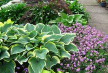 Gardening ideas / by Amy Eisenberger Bailey