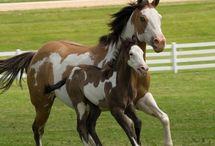 "Equine Eccentric / Horses, horses, horses!!!  I'm not ""horse crazy,"" I prefer the term ""equine eccentric."" / by Chelsea S"