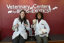 Veterinary Center for Birds and Exotics  / An all-bird/exotic pet hospital caring only for birds, rabbits, ferrets, guinea pigs, chinchillas, small rodents, reptiles, amphibians, hedgehogs & sugar gliders (no dogs/cats). The Center was designed specifically with exotic pets' needs in mind. Dr. Hess, our board-certified bird specialist, who is 1 of about 150 bird specialists in the world, was president of the international Association of Avian (Bird) Veterinarians in 2009-10 & has over 18 years of experience in caring for exotics.  / by Veterinary Center for Birds and Exotics