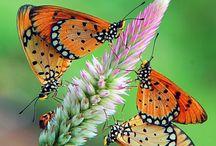 Nature / by Becky Semer