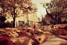Fall / by TIASIX ...
