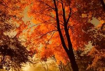 Autumn / by Bertha Garza-Cisneros