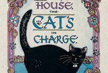 Beautiful black cats / by Peta Fletcher