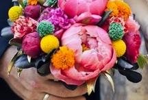 Flowers  / by Carolyn Corlett