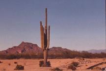 Deserts / by Deanne Boyce