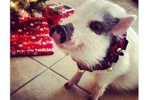 Pigs!!  / by Elizabeth Kelso