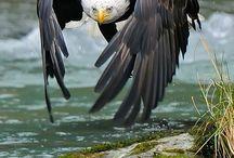 Animals-Birds-Raptors / by Ellary Branden