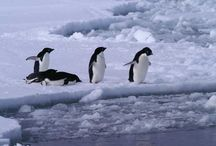 Penguins / by BioExpedition