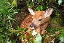 Deer Management / by Deer & Deer Hunting
