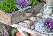 Potting Benches and Sheds, Work Stations, and Tools / Organized and Inspired to Pot up and to Garden... / by Mel G.