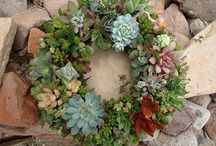 Succulent Love / by LuxeFinds.com .
