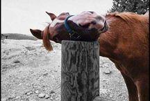 Horses / by Denise Joslin