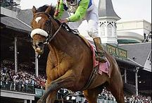 THOROUGHBRED LEGENDS / by Donna Brown