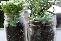 Plants & Gardening / by Laura Kristoff