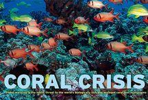 UW Invertebrates:  Nudis 'n Corals / Underwater photographs of marine invertebrates, including #sponges, #anemones, #starfish, #corals and #crustaceans #scuba #underwater  / by Carolyn Sorensen