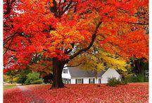 Autumn / by Tegan Thomas
