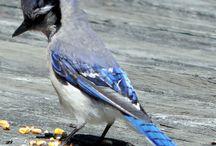 birds / by Helena Ely