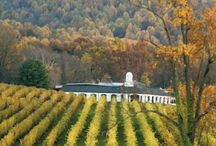 Local Vineyards / by Lucy Leggiero