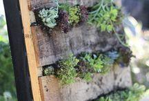 Vertical Gardens / by Urban Gardens