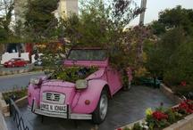 Gardening  / by Toni Basile Dole