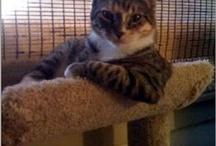 I like catz / by Michelle Gunn