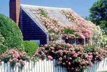 beautiful climbing roses / by Kristen Ayers