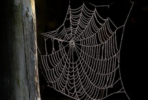 spiders board / by rachel slater