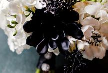 Black and White with POPS of color / by Andrea Lyons